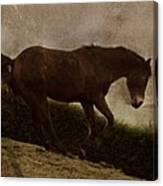 Prancing Horse Canvas Print