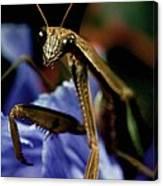 Praying Mantis  Closeup Portrait 4 On Iris Flower Canvas Print