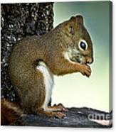 Praying Squirrel Canvas Print