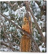 Praying Squirrel  Canvas Print