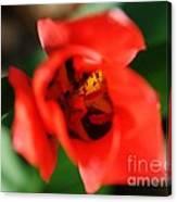 Pre-pollination  Canvas Print