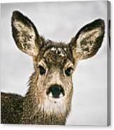 Precious - Mule Deer Fawn - Casper Mountain - Casper Wyoming Canvas Print