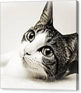 Precious Kitty Canvas Print