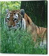 Predator In The Grass Canvas Print