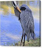 Preening By The Pond Canvas Print