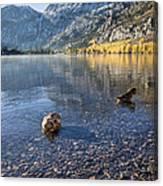 Preening Ducks At Silver Lake Canvas Print
