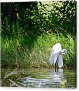 Preening In Tranquil Sunlight Canvas Print