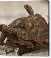 Prehistoric Turtles Canvas Print