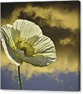 Prelude To Spring Canvas Print