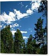 Prescott National Forest Spring Skies Canvas Print