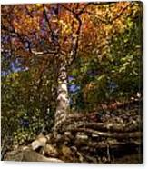 Preserve Trails In Fall Six Canvas Print