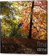 Preserve Trails In Fall Three Canvas Print