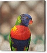 Pretty Bird - Rainbow Lorikeet Canvas Print