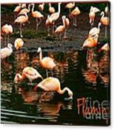 Pretty Flamingos Canvas Print