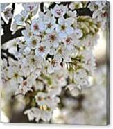 Pretty Flowering Trees Canvas Print