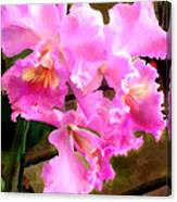 Pretty In Pink Cattleya Orchids Canvas Print