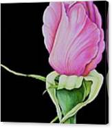 Pretty In Pink Rose Bud Canvas Print