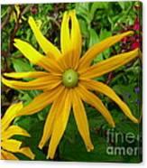 Pretty In Yellow Canvas Print
