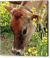 Pretty Jersey Cow - Vertical Canvas Print