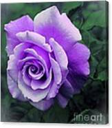Pretty Lilac Rose Canvas Print