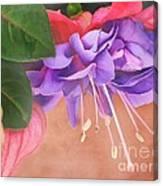 Pretty Little Fuchsia Canvas Print