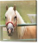 Pretty Palomino Horse Photography Canvas Print