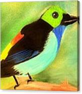 Pretty Paradise Tanager Canvas Print