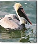 Pretty Pelican In Pond Canvas Print