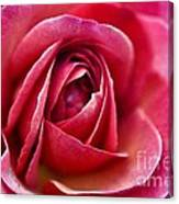 Pretty Pink Muted Canvas Print
