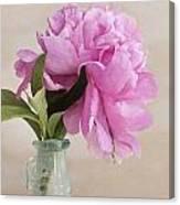 Pretty Pink Peony Canvas Print