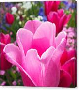 Pretty Pink Tulip And Field With Flowers And Tulips Canvas Print