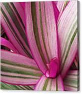 Pretty Plant Leaves 2 Canvas Print