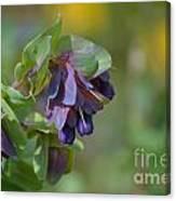 Pretty Purple Flowers In Ireland Canvas Print