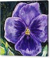 Pretty Purple Pansy Person Canvas Print
