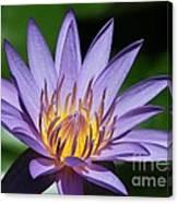 Pretty Purple Petals Canvas Print