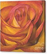 Pretty Rose Canvas Print