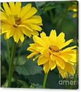 Pretty Yellow False Sunflowers In Bloom Canvas Print