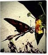 Prey The Yellow Flower Canvas Print