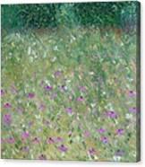 Priairie Cone Flowers Canvas Print