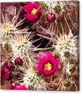 Prickley Cactus Plants Canvas Print