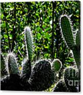 Prickly Juans Canvas Print
