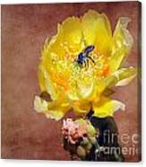 Prickly Pear And Bee Canvas Print