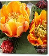 Prickly Pear Blossom Orange Canvas Print