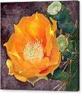 Prickly Pear Blossom Canvas Print