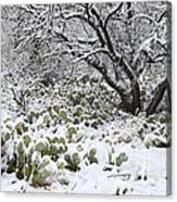 Prickly Pear Cactus And Mesquite Tree Canvas Print