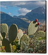 Prickly Pear Cactus And Mountains Canvas Print