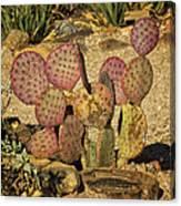 Prickly Pear Cactus Dsc08545 Canvas Print