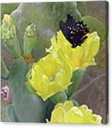 Prickly Pear Flower Canvas Print