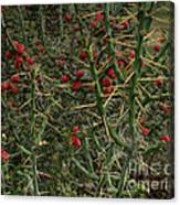 Prickly Pete Cactus Canvas Print