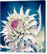 Prickly Thistle Bloom Canvas Print